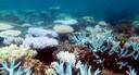 Omvangrijke koraalverbleking in het Great Barrier Reef in Australië.