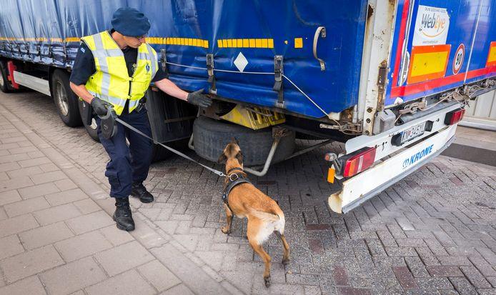Een hondengeleider van de Koninklijke Marechaussee controleert vrachtwagens op eventuele verstekelingen, die via Hoek van Holland met de boot naar Engeland gaan.