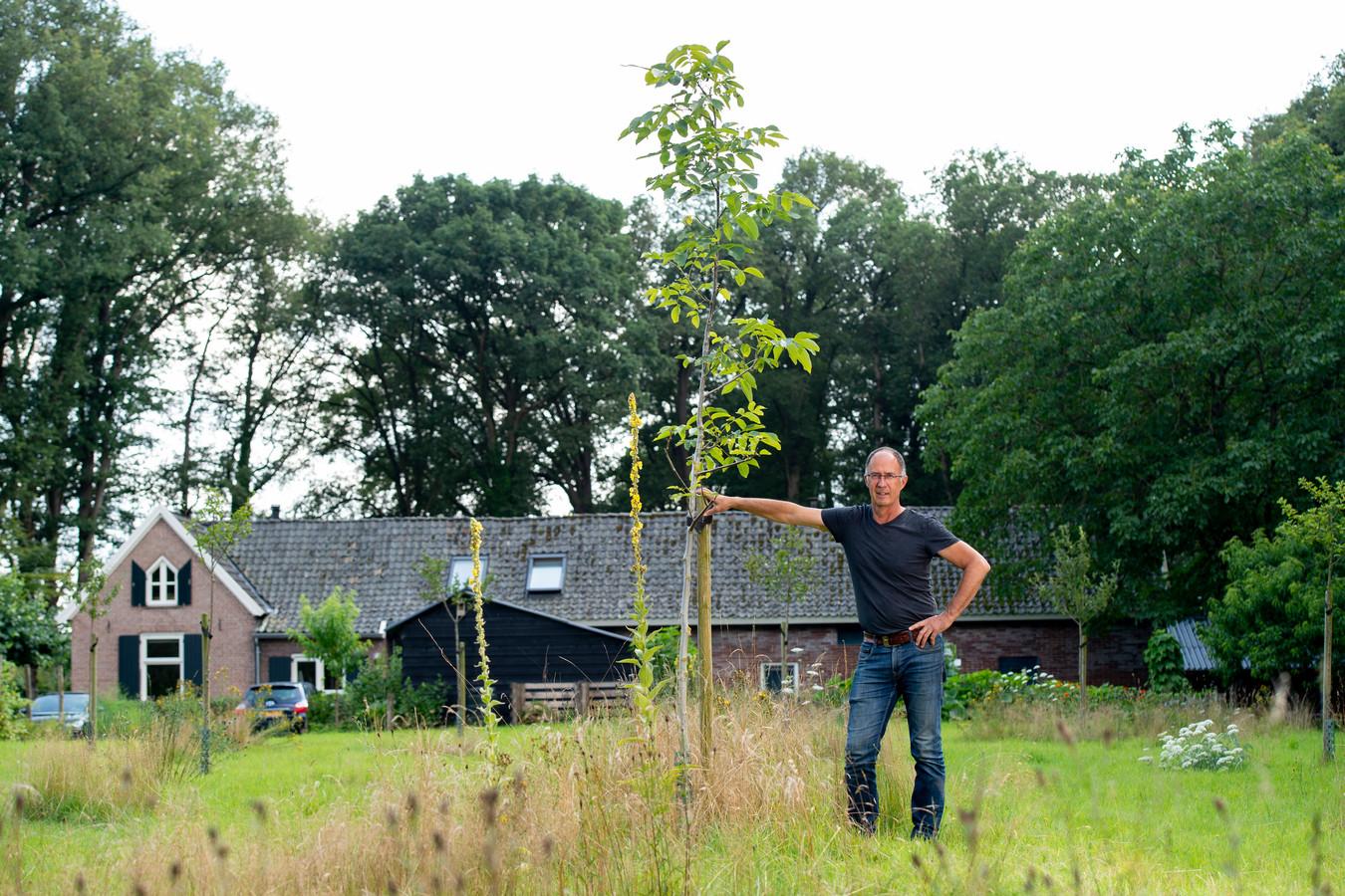 Ton Swagten bij zijn jonge walnootboom in zijn theetuin langs het veelbewandelde Pieterpad. Sinds een maand kunnen toeristen hier terecht om de door Swagten verbouwde thee te drinken.