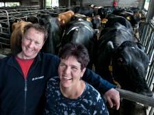 Film kijken tussen de koeien in Vlierden