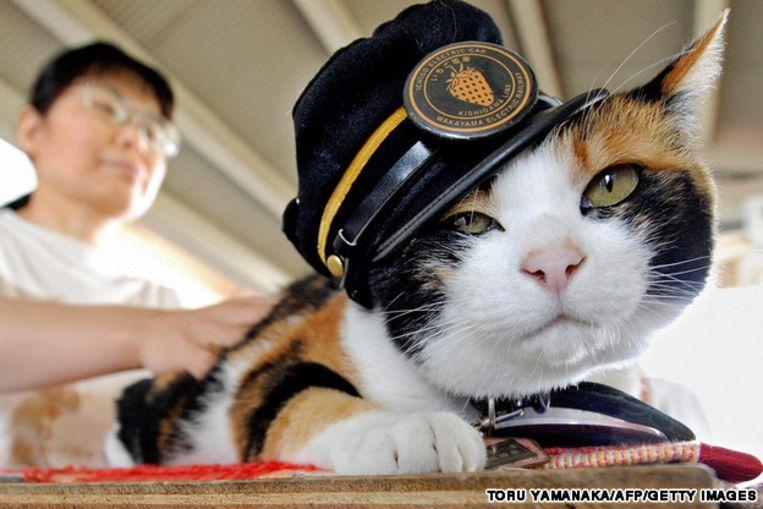 Japan rouwt om de dood van lapjeskat Tama