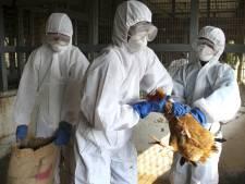 VS verdedigen advies censuur vogelgrieponderzoek