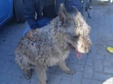 Oververhitte hond bevrijd uit bloedhete auto in Utrecht