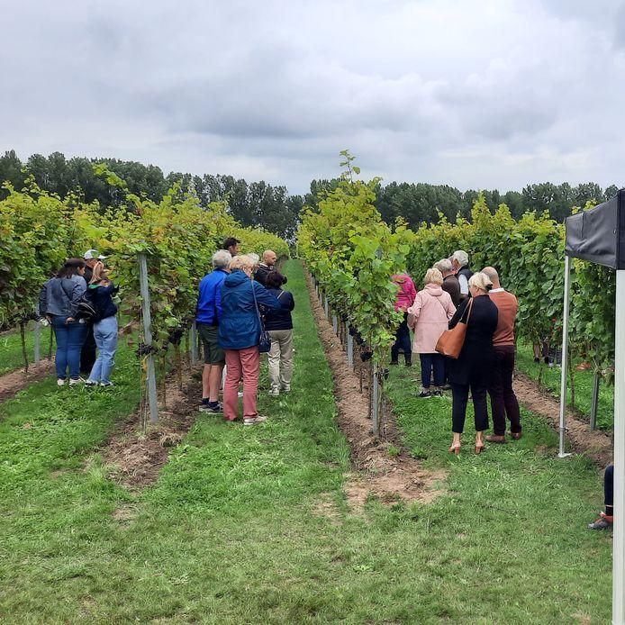 Geraardsbergen: Een bezoek aan de grote wijngaard mocht niet ontbreken.