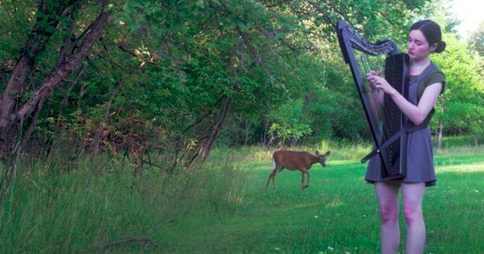 Rencontre surprenante entre un cerf et une joueuse de harpe.