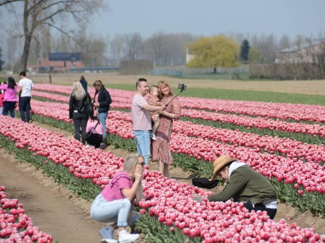 Voor de perfecte foto trappen we die tulpen wel even plat