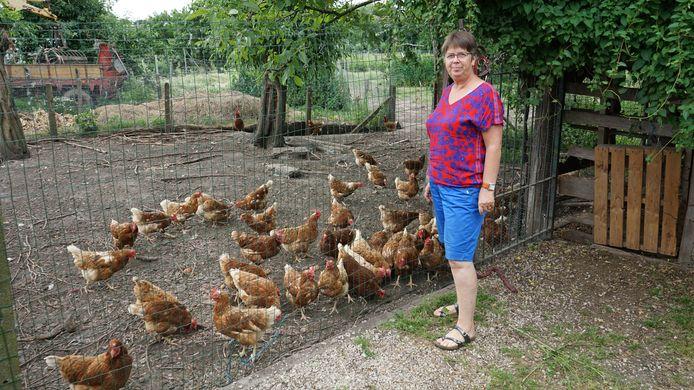 Lieve Verhelst heeft 180 legkippen die gemiddeld 150 verse eieren per dag leggen.