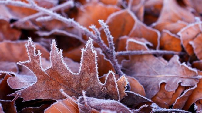 Woensdrecht eerste plek van het land waar deze nazomer temperatuur onder de nul graden gaat