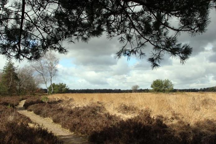 Op dit heidecomplex aan weerszijden van de weg Elspeet-Uddel moest het opvangkamp komen. foto Tom van Dijke