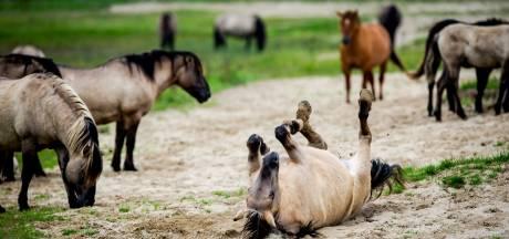 Deze vijf dieren zijn de 'Big Five' van Rhenen
