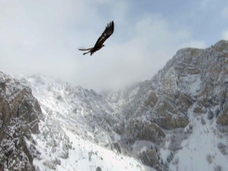 Drone vliegt met arend mee en dat levert prachtige beelden op