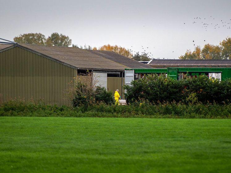 Kippenbedrijf ontruimd na ontdekking zeer besmettelijke vogelgriep