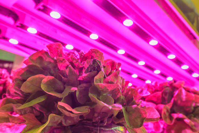 Dankzij gekleurd LED-licht vervangen de kruiden