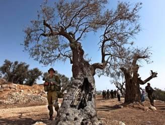 Kolonisten die bomen van Palestijnen kappen nooit vervolgd