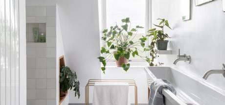 Deze planten doen het uitstekend in de badkamer