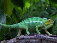 Saisie de plus de 300 spécimens d'espèces protégées