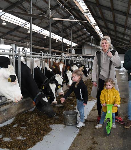 Op deze Roosendaalse boerderij verdienen bezoekers punten voor een selfie met een poepende koe