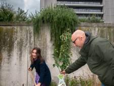 112 bomen er bij op de eerste Dag van de Zuivere Lucht in Den Bosch en Tilburg, als beginnetje