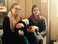 Zorgboerderij geeft hoop op: 'Gestolen hondjes komen niet meer terug'