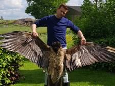 'Alle moeite voor niets': zeldzame roofvogel vliegt zich dood tegen windturbine