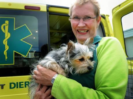 Dierenambulance haalt geen gewonde dieren meer op in Vlissingen, omdat gemeente niet betaalt