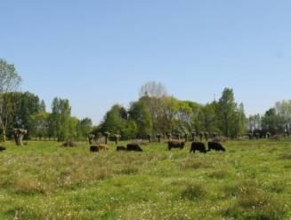 Gebied rond bron Molenbeek krijgt natte natuur, bebossing en speelzones