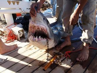 Sharm-el-Sheikh zit met een serieus haaienprobleem