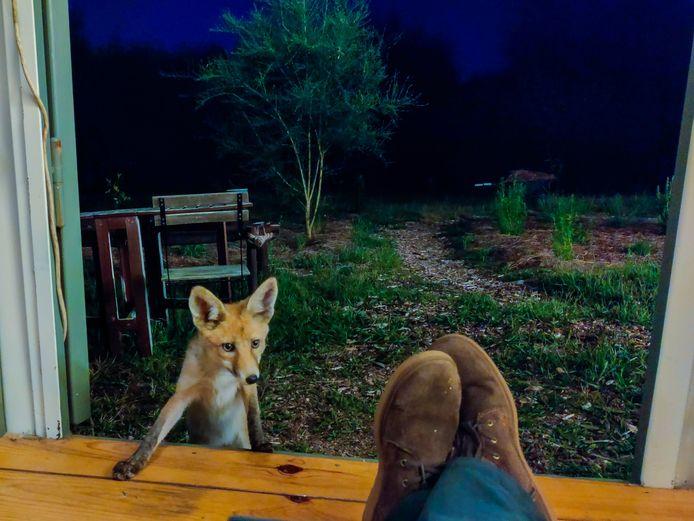 Ontwerper Dave Hakkens uit Valkenswaard bouwt in Portugal aan zijn eigen duurzame gemeenschap. Hij krijgt er regelmatig bezoek van vossen.
