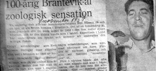 Een krantenbericht ui 1959 verhaalt over de stokoude paling uit Brantevik.