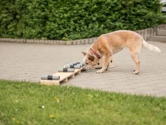 Kunnen honden echt ruiken of je besmet bent met het coronavirus?