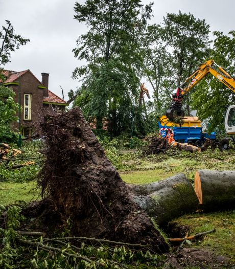 Herstel groen in Leersum gaat vermoedelijk nog járen duren en dit is waarom