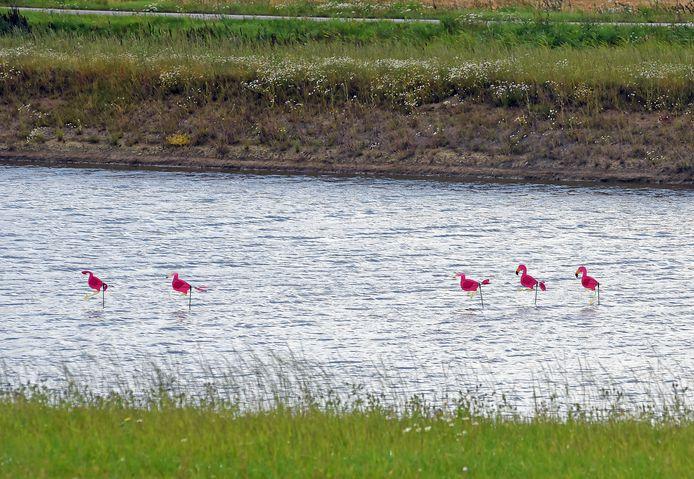 'Flamingo's'  langs de weg, net voorbij de Sluiskiltunnel.