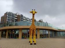 Giraf op de Scheveningse boulevard heeft eindelijk een naam en ze heet...