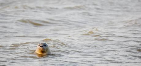 Gemist? Zes jaar cel geëist voor dodelijk geweld en overstekende zeehonden op Brouwersdam