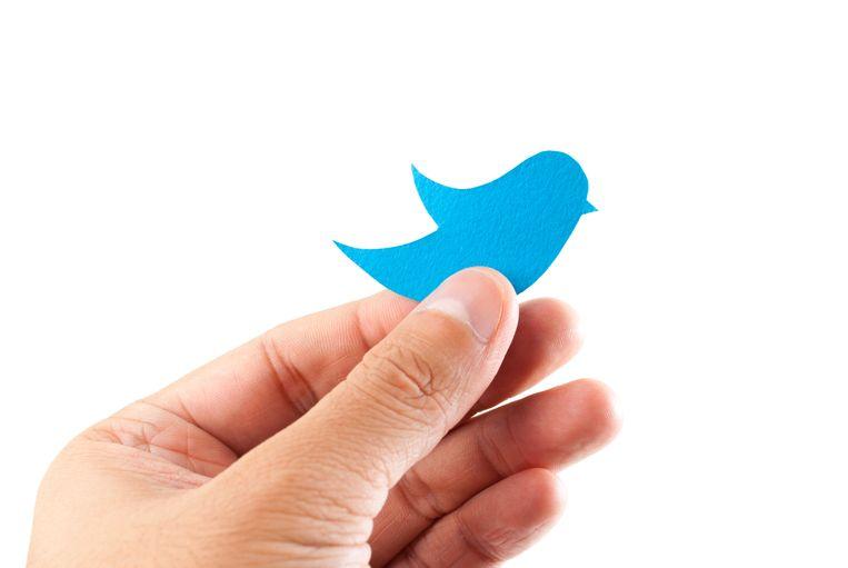 De twittervogel. Beeld Thinkstock
