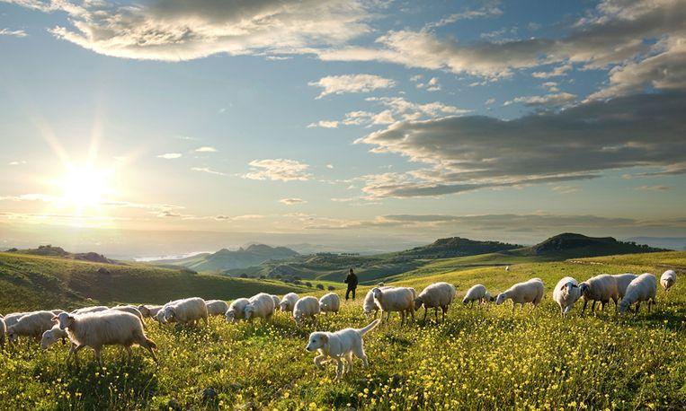 Wordt Hans schapenhoeder in Patagonië?