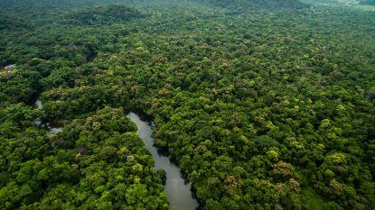 Drie Europese landen doneren 279 miljoen euro voor bescherming Colombiaans Amazonewoud