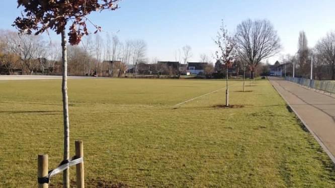 36 nieuwe bomen op het Oosterlindeveld