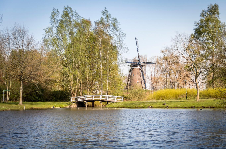 Gemeentevijver in Nuenen.