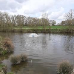 Sparkevaardeken kleurt wit door rioolwater, beluchten is nodig om de vissen te redden