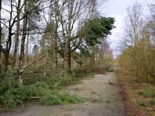 Boswachter Brabants Landschap: 'Wandelaars in bos moeten alert zijn op gevaarlijke situaties'