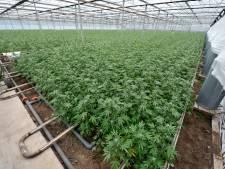 Staat vordert ruim 1,5 miljoen euro van wietbende die onder meer hennepkwekerij in Steenwijk dreef