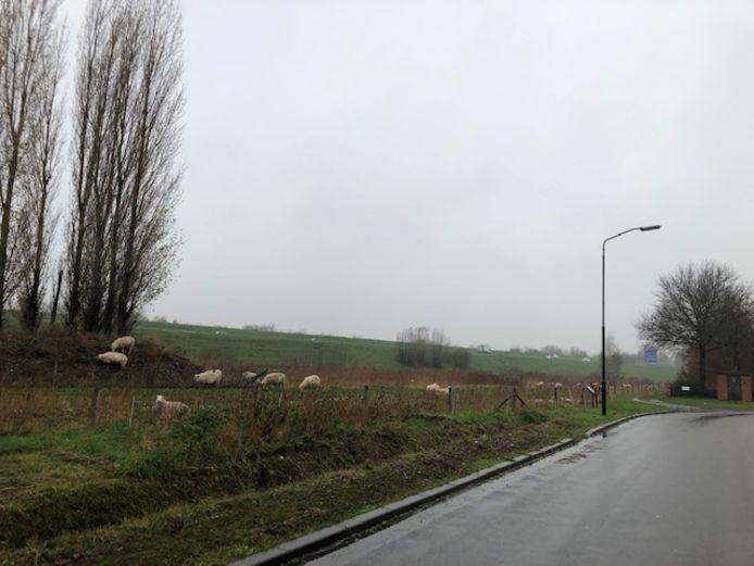 Op de rand van de bedrijventerrein De Dubbelen langs de A50 in Veghel zouden windturbines moeten komen te staan.