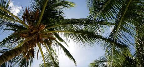 Opvallende diefstal: palmboom verdwenen uit tuin in 's-Heerenberg