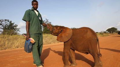 """WWF-rapport 2015: """"Nooit eerder zoveel soorten bedreigd"""""""
