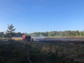 Eén hectare afgebrand op Kalmthoutse Heide: brandweer snel en massaal ter plaatse