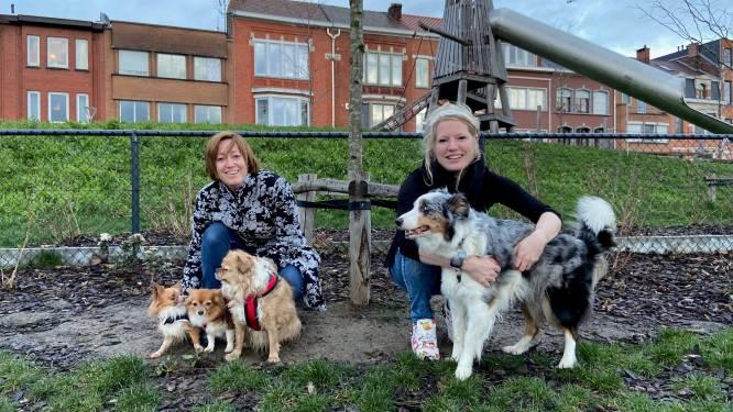 "Provincie Vlaams-Brabant bereid om dierenasiel in regio Leuven te steunen: ""Kwalitatieve opvang is van groot belang"""