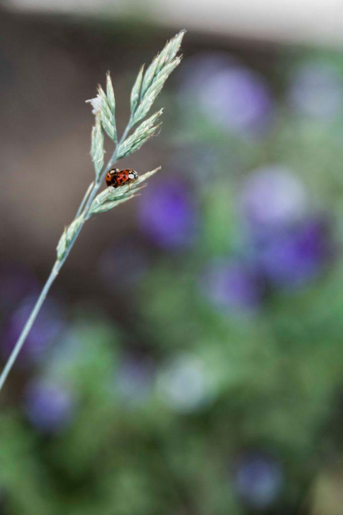 En ook insecten en kleine diertjes hebben er plezier aan.