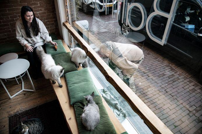 Lindy Bender, medewerker van het kattencafé komt langs om de dieren te verzorgen en gezelschap te houden.