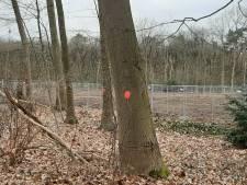 En wéér verdwijnen er bomen langs de Utrechtseweg: 'Ik zag een reebokje verschrikt wegrennen'